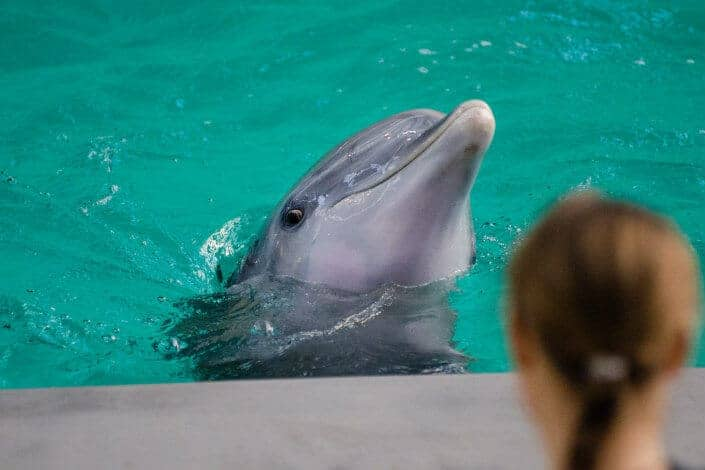 adventurous date ideas-swim with dolphins