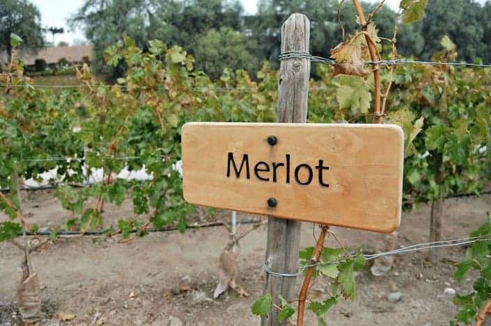 types of wine: merlot
