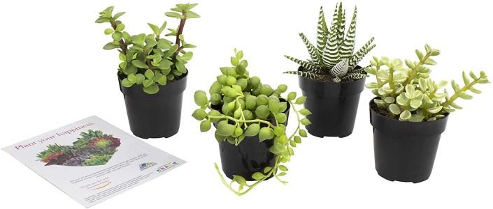 Office Plants (1)