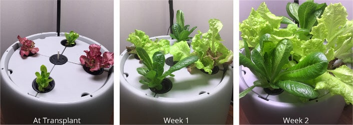 rootfarm v2.1
