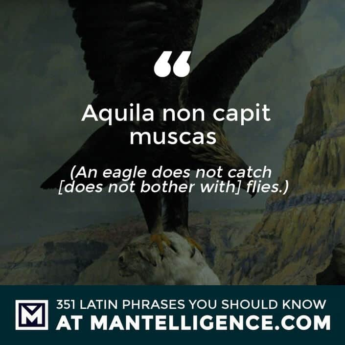 Aquila non capit muscas.- An eagle does not catch [does not bother with] flies.
