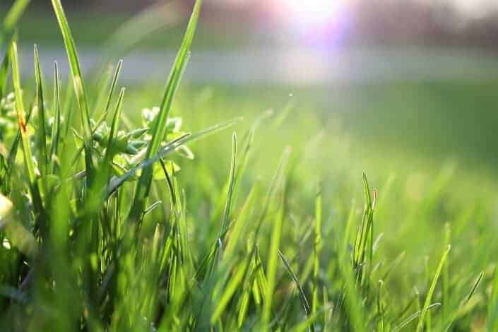 funny questions to ask-If you could replace all of the grass in the world with something else, what would it be_