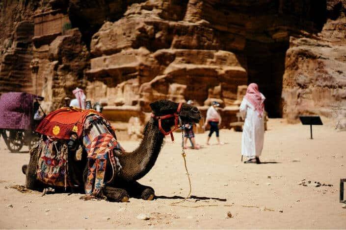 Camel with saddle sitting on sand