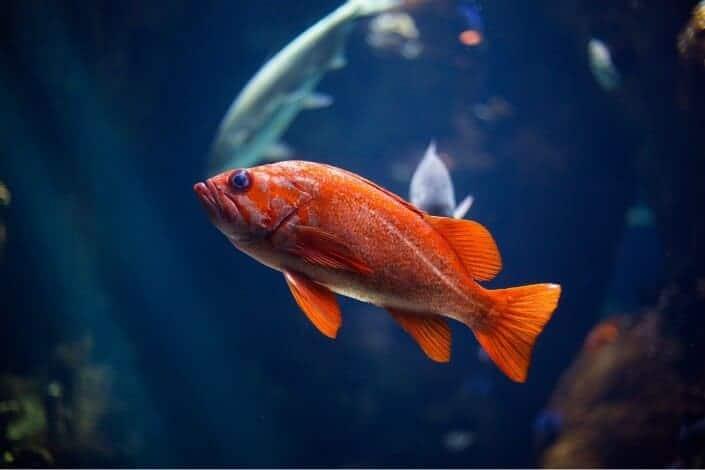 list of hobbies - Fishkeeping