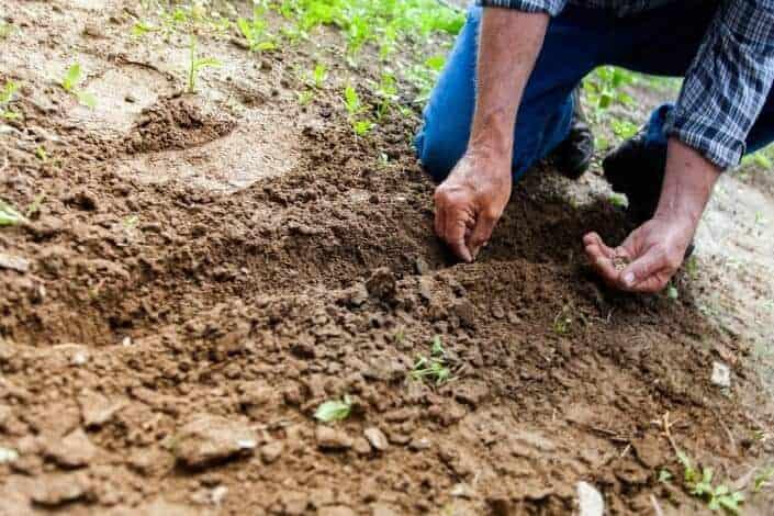 list of hobbies - Gardening