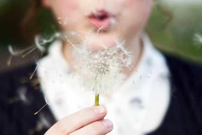 A dandelion flower being blown.
