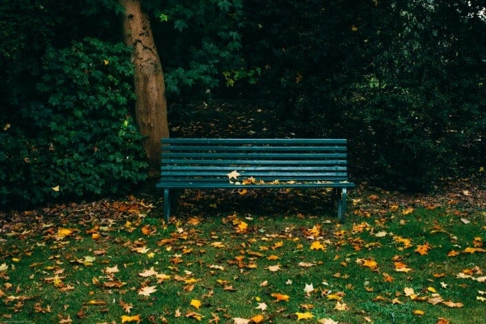 What If Questions - What if you could sit on a bench in a beautiful woods, who would you like sitting next to you on the bench and why