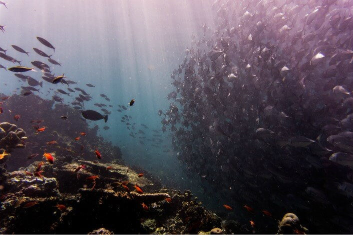 Underwater with schools of fish.