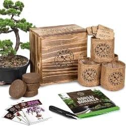 Bonsai Garden Seed Starter Kit (1)