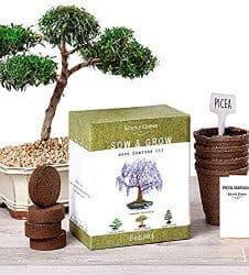 romantic gifts for girlfriend - bonsai garden kit
