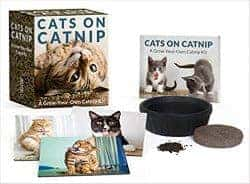 romantic gifts for girlfriend - catnip kit