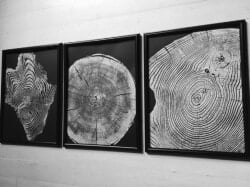Gift Ideas for Wife - Set Of 3 Prints Tree Ring Art
