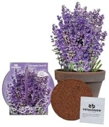 Gifts for Mom - Grow Your Own Lavender From Seed