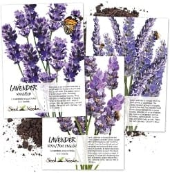 Grow Your Own Lavender From Seed (1)