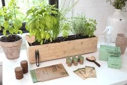 Indoor Herb Garden Kit (1)