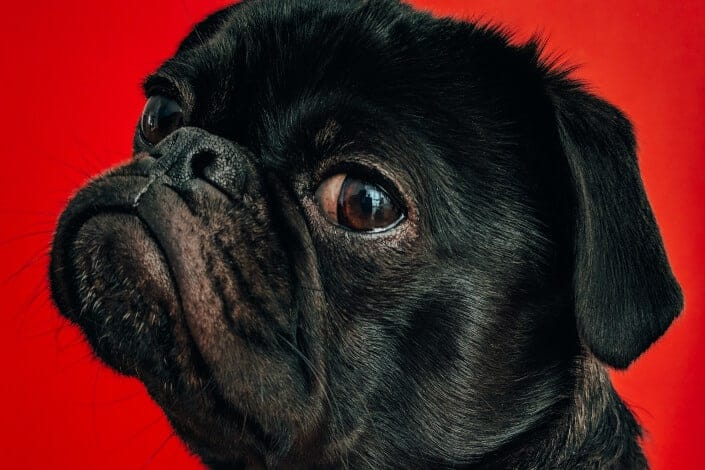 corny jokes-Why do dogs like sandpaper_ Because they're ruff.