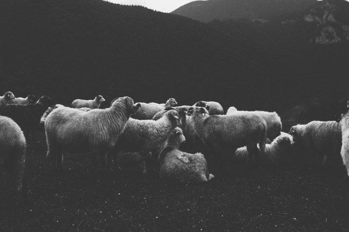 bad dad jokes - Knock, knock Who's there_ Barbara. Barbara who_ Barbara, black sheep, have you any wool_