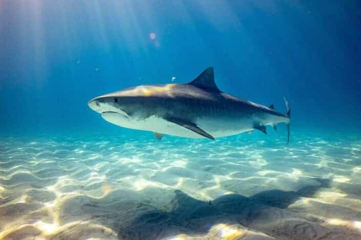 corny jokes-What did the shark get on his biology test_ A sea-minus.