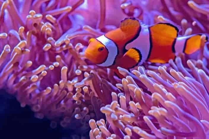 corny jokes-What was the shark's favorite Pixar movie_ Eating Nemo.
