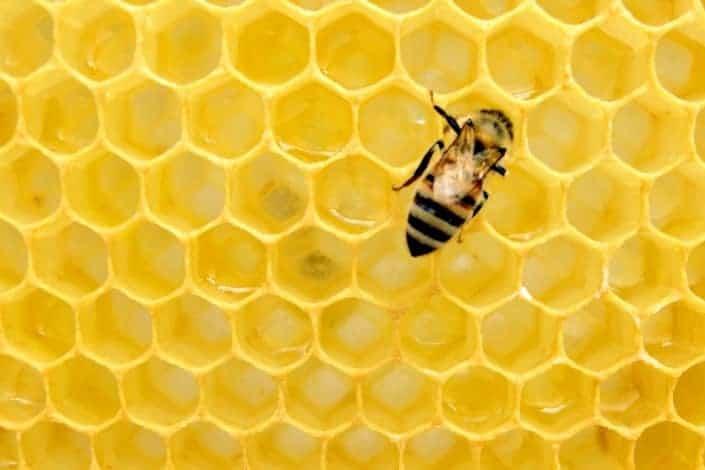 funny knock knock jokes - Knock, knock. Who's there_ Honey bee. Honey bee who_ Honey bee a dear and get me some water