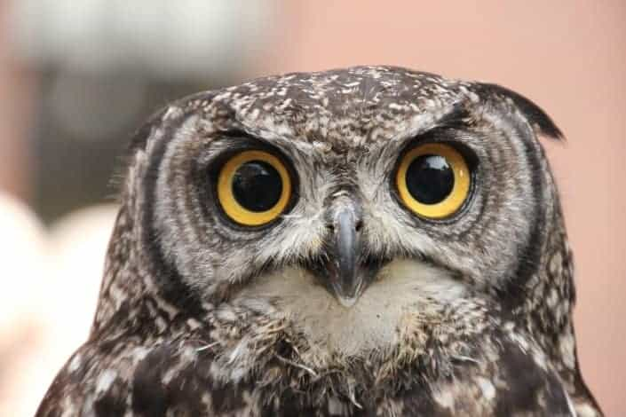 funny knock knock jokes - Knock, knock. Who's there_ Twit Twit who_ Did anyone else hear an owl_