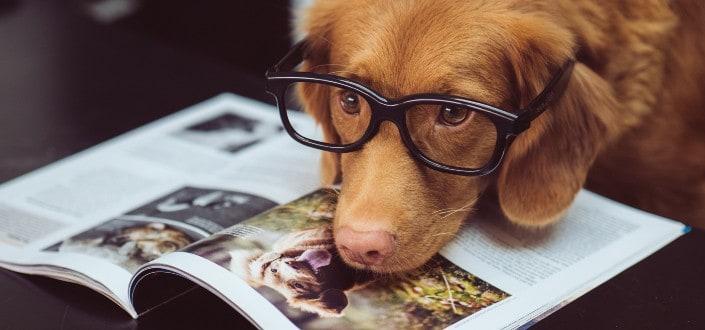 funny knock knock jokes - dog jokes