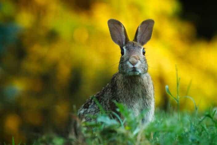 stupid jokes-rabbit