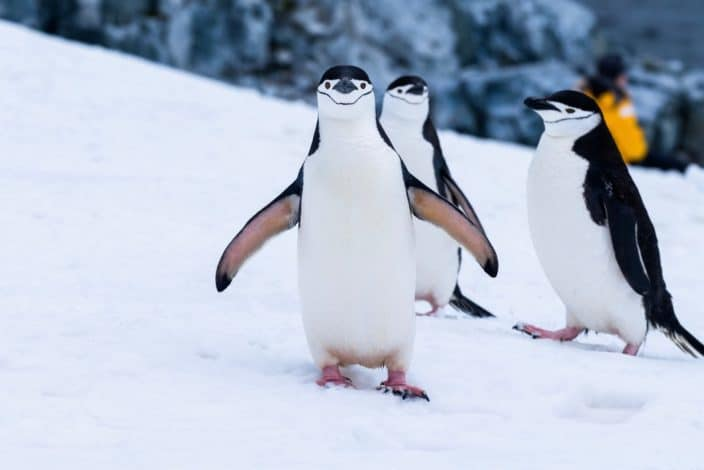 Adventurous things to do - See penguins in Antarctica.jpeg