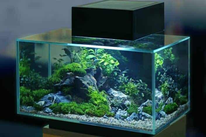 Hobbies for women-aquarium
