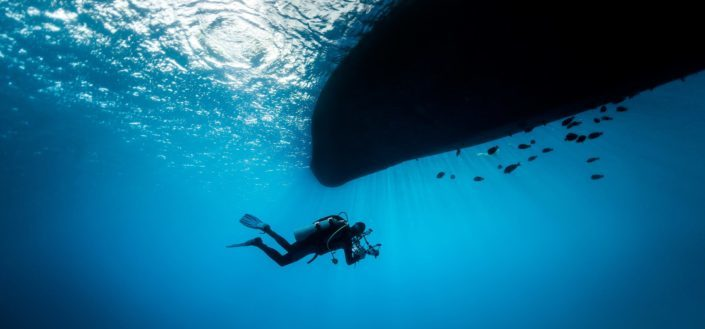 adventurous things to do - shark diving4.jpeg