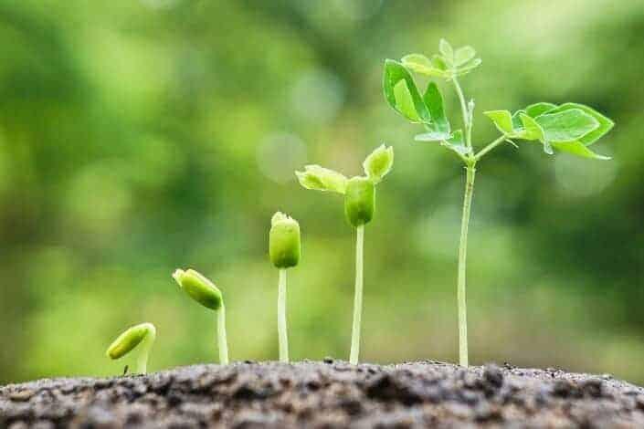 creative hobbies-plant