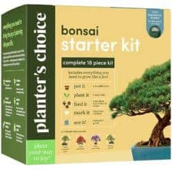 birthday gifts ideas - Bonsai Starter Kit