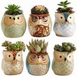 birthday gifts ideas - Owl Pot
