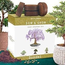 DIY Retirement Gift Ideas for Men - Nature's Blossom Bonsai Tree Kit (1)