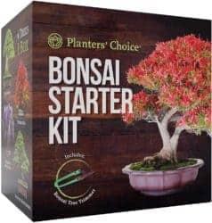 DIY gifts - Bonsai Starter Kit