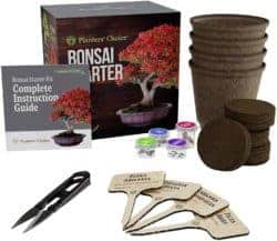 Unique but Thoughtful Gifts For Men Who Have Everything - Bonsai Starter Kit