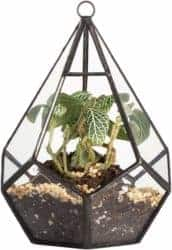 Diamond Geometric Polyhedron Air Plant Holder