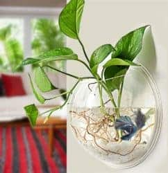 cool gifts - Wall-Mounted Plant Pot 1 Gallon Fish Tank