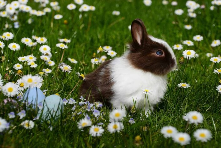 White and Brown Rabbit on flowery Field