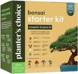 unique gifts - Bonsai Tree Growing Kit