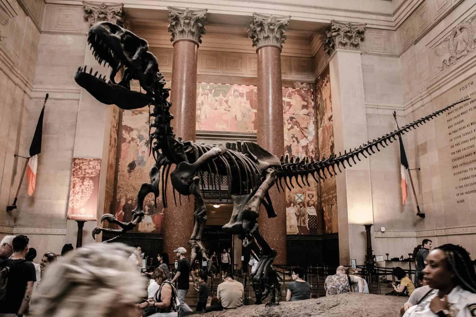 Skeleton of dinosaur in a museum
