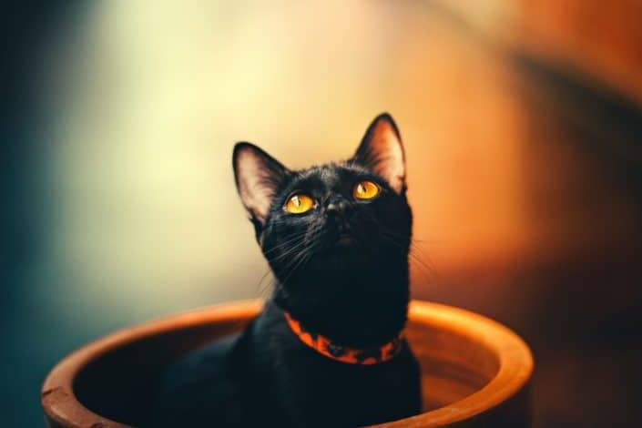Halloween Trivia for Kids - Black cats are known for what superstitious belief? Bad luck.jpg