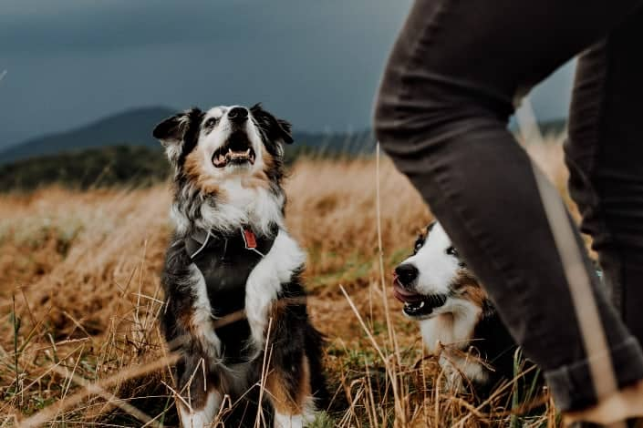 Fun Trivia Questions - Which planet shares its name with a dog