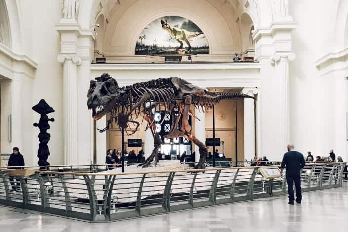 Fun Trivia Questions - Which country has largest known T-Rex skeleton was found