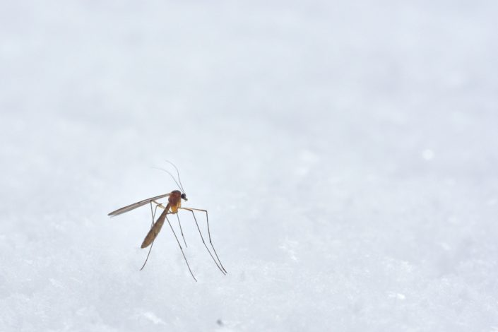 Best Trivia for Kids - Which insects cause malaria? Mosquitoes.jpg