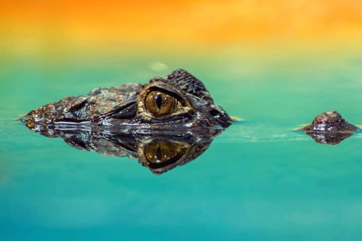 141 Trivia Questions for Adults - What were the earliest forms of contraceptive made from?Crocodile Dung