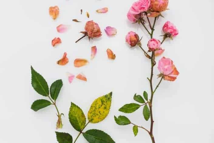 6 Creative but interesting hobbies - Flower pressing