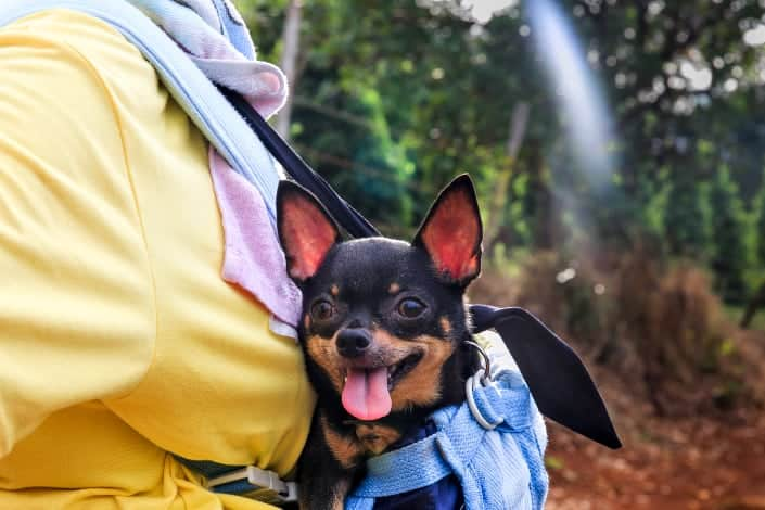 Random Trivia Questions and Answers - Smallest breed of dog