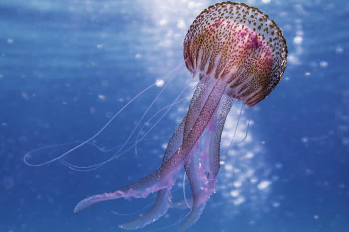 141 Trivia Questions for Adults - Which fish will evaporate if left in the sun? Jellyfish