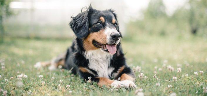 Animal Trivia Questions - Hard Animal Trivia Questions.jpg